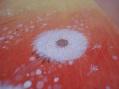 Dandelion Fields closeup